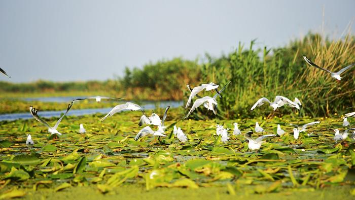 Fauna del Delta del Danubio