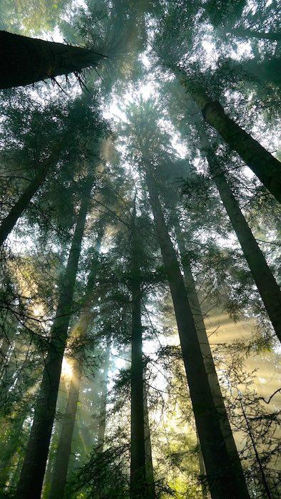 Bosque del Parque Nacional del Monte Ceahlau. ©Iñigo Pedrueza